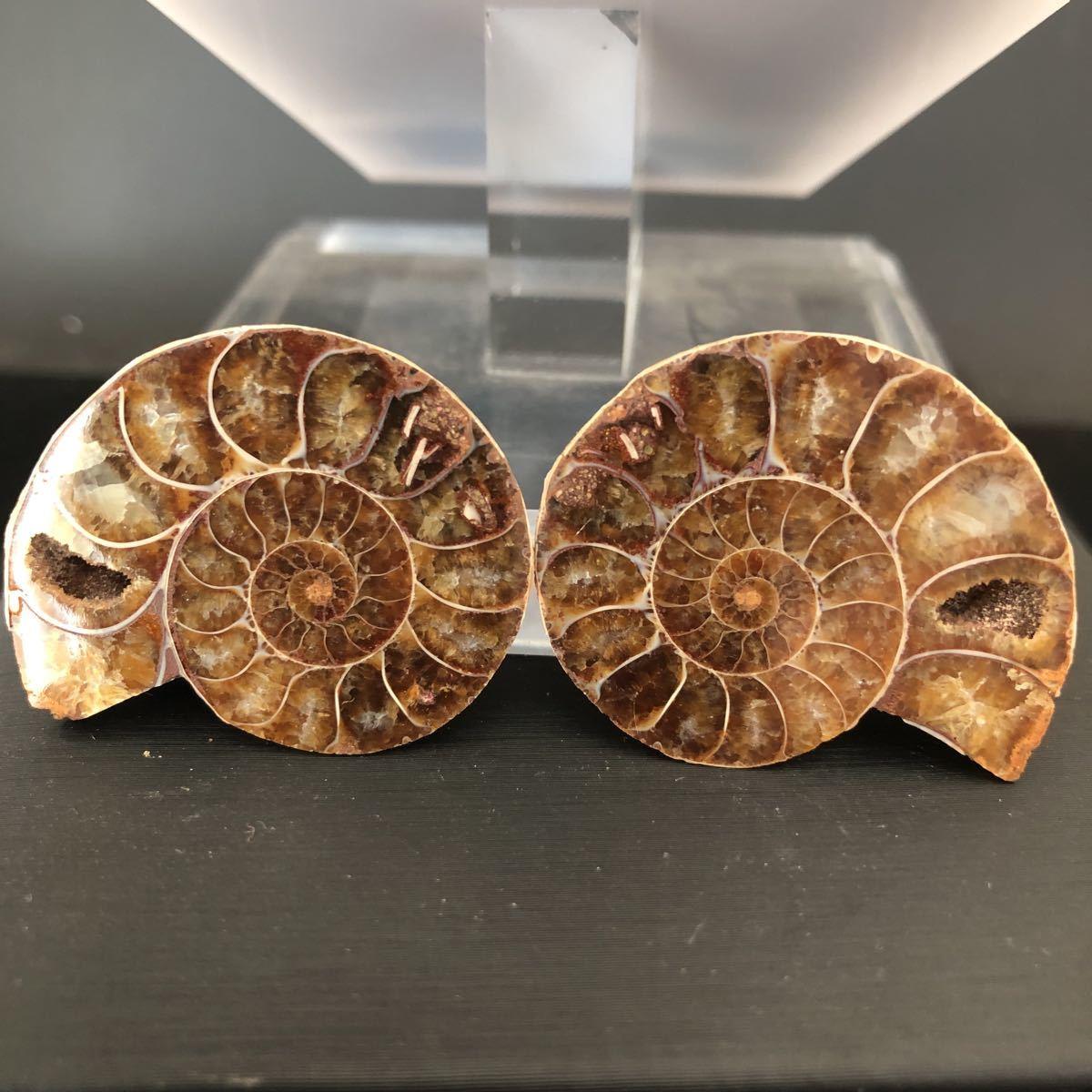 【古憶】化石 アンモナイト 断面 マダガスカル産 方解石化 標本 鉱物 原石 天然石2個セント21.5g/qp70