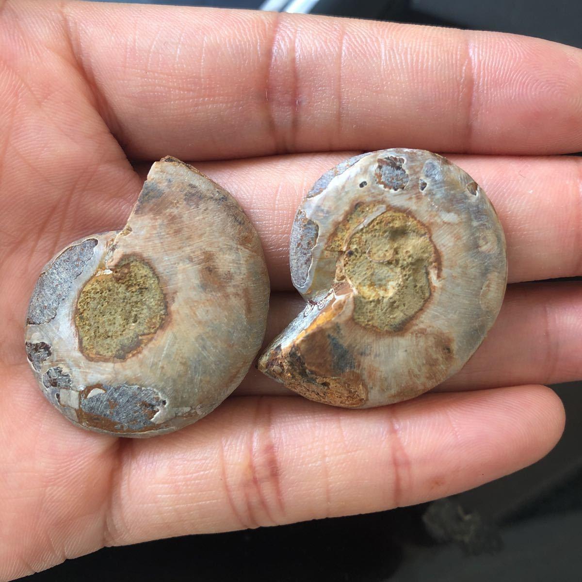 【古憶】化石 アンモナイト 断面 マダガスカル産 方解石化 標本 鉱物 原石 天然石2個セント21.5g/qp70_画像5