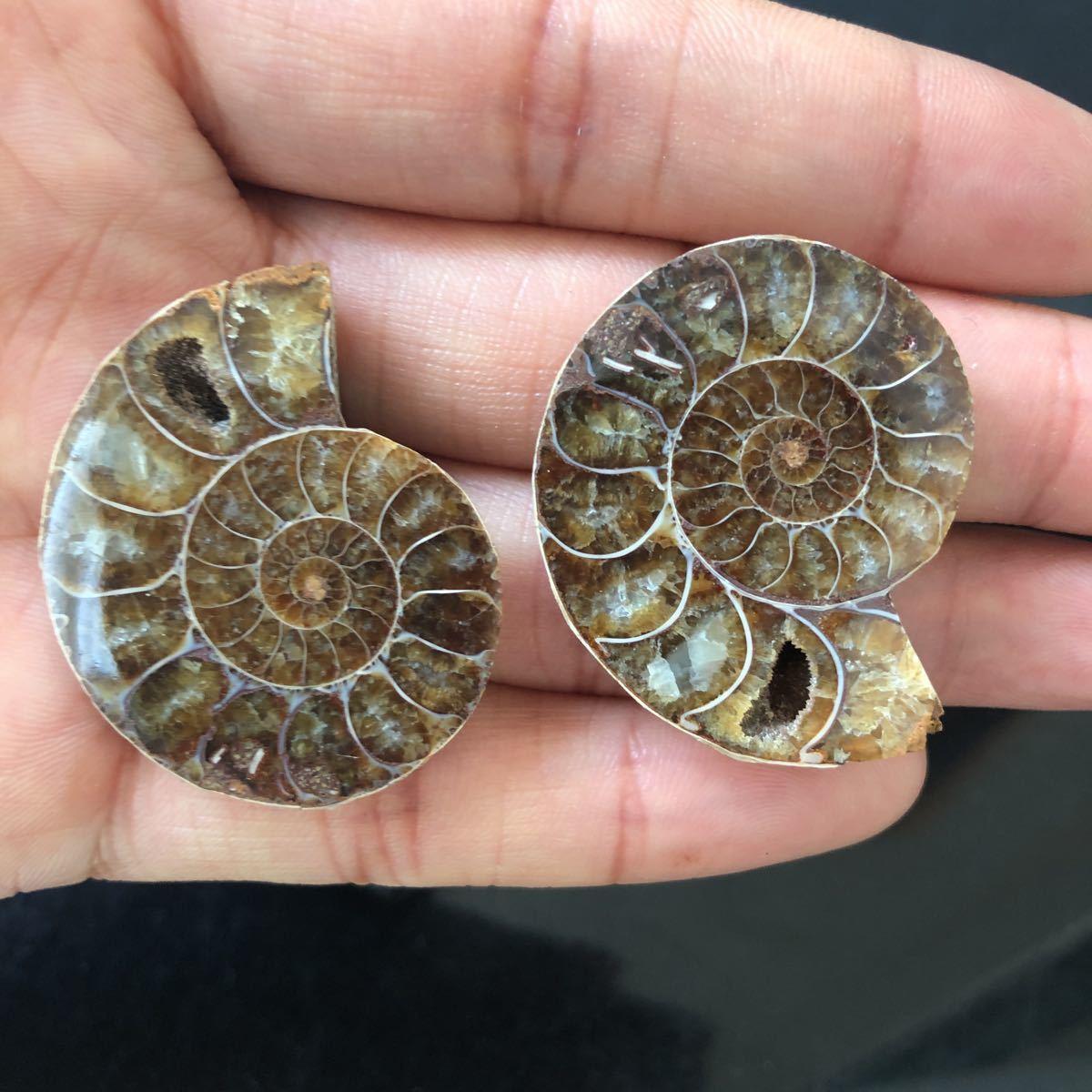 【古憶】化石 アンモナイト 断面 マダガスカル産 方解石化 標本 鉱物 原石 天然石2個セント21.5g/qp70_画像6