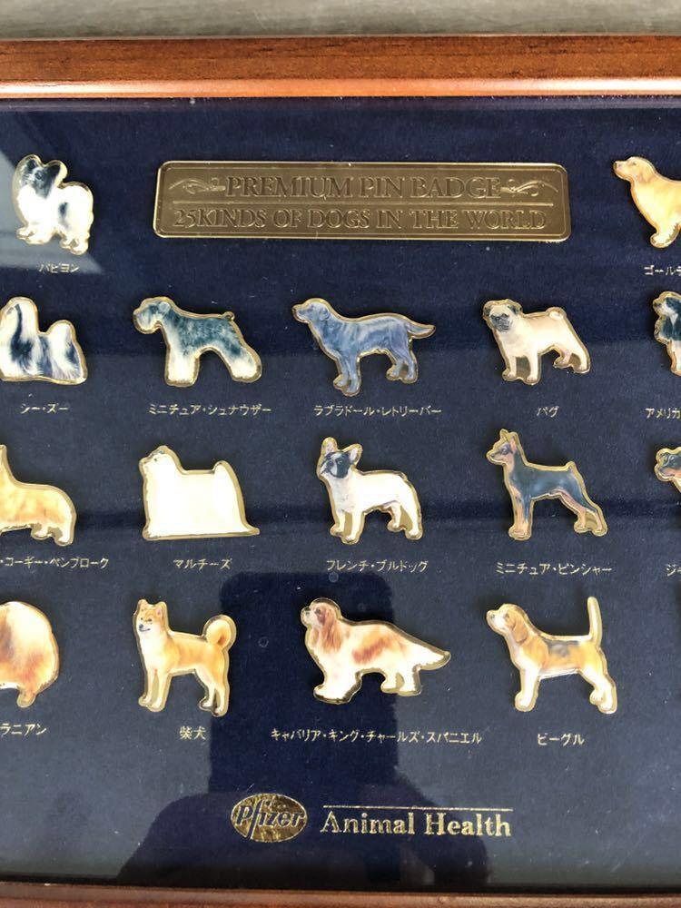 動物病院専用非売品 ファイザー製薬 プレミアム ピン バッチ 世界の25種類の犬のピンバッチ_画像9