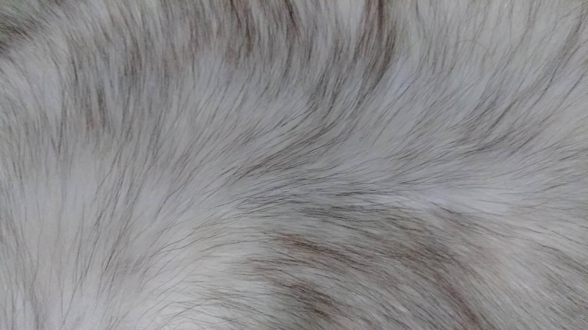 サガ フォックス、ショール、毛皮、未使用、振袖に、成人式に、手触り良し_画像2