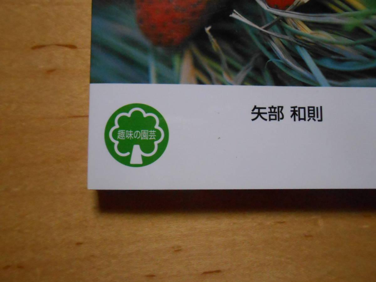 イチゴ NHK 趣味の園芸 よくわかる栽培12か月_画像5