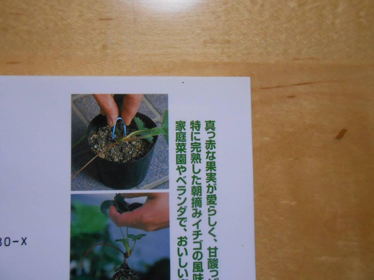 イチゴ NHK 趣味の園芸 よくわかる栽培12か月_画像6