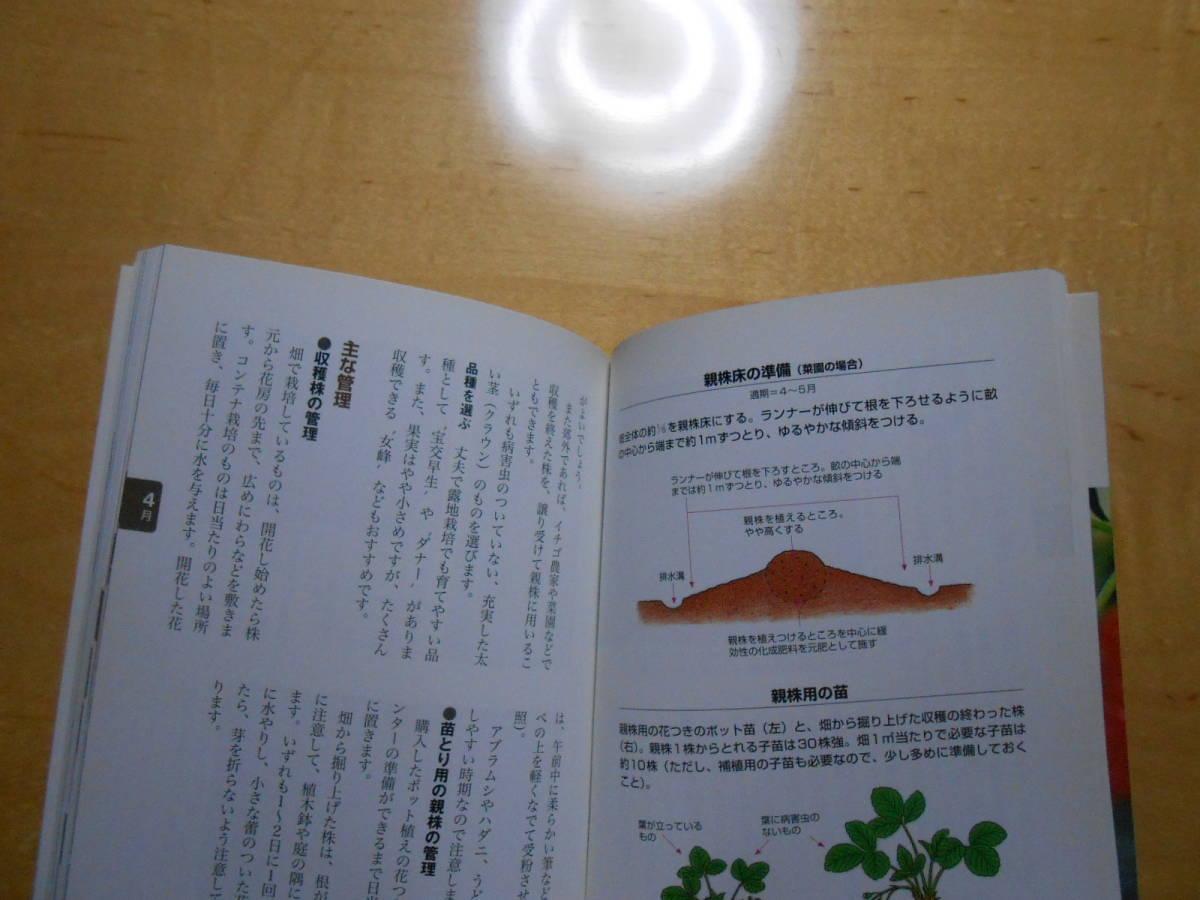 イチゴ NHK 趣味の園芸 よくわかる栽培12か月_画像10