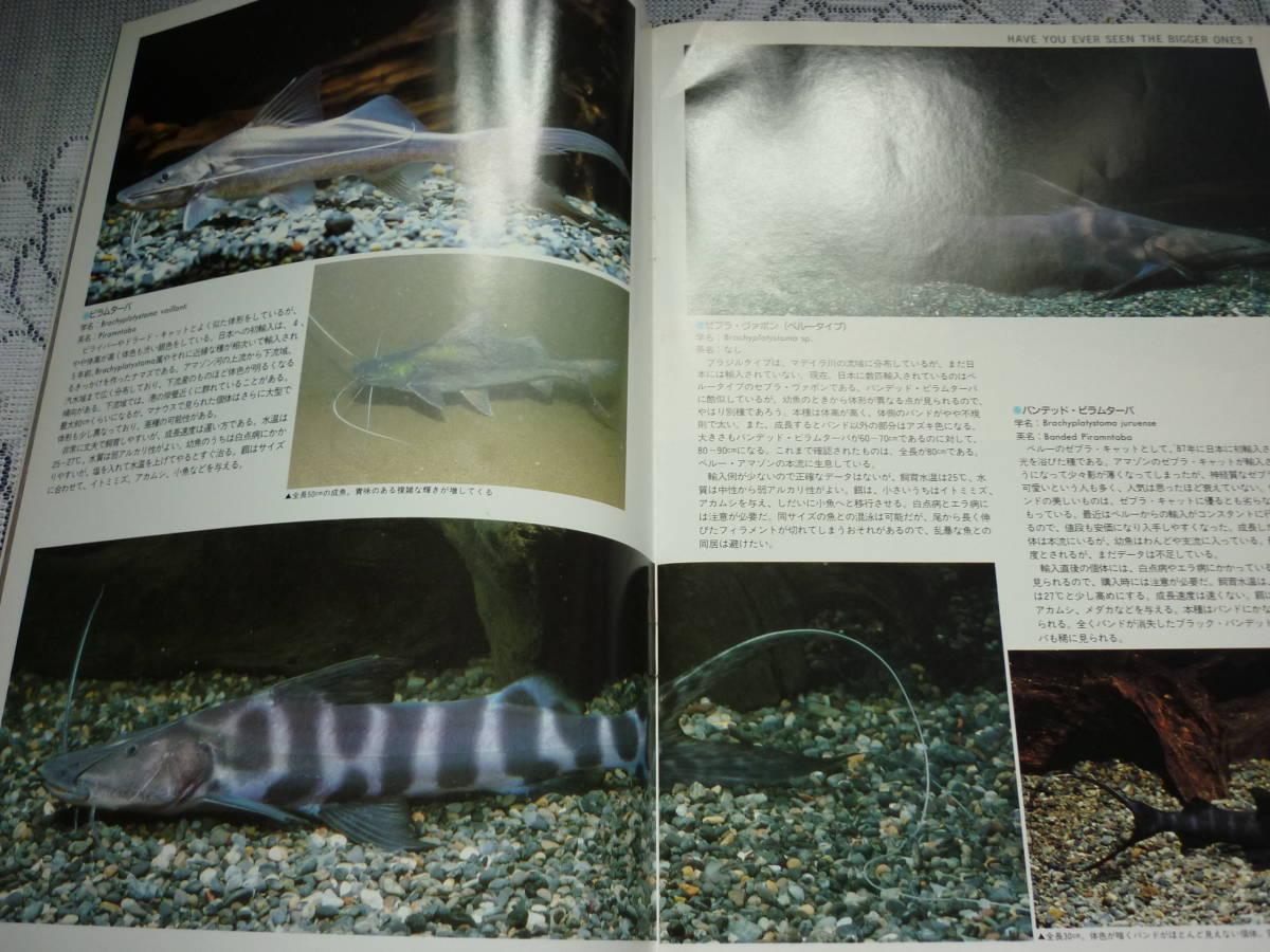 アクアマガジン 創刊2号 Aqua magazine 1989 SUMMER 特集 ビッグ・キャット PART1 _画像3