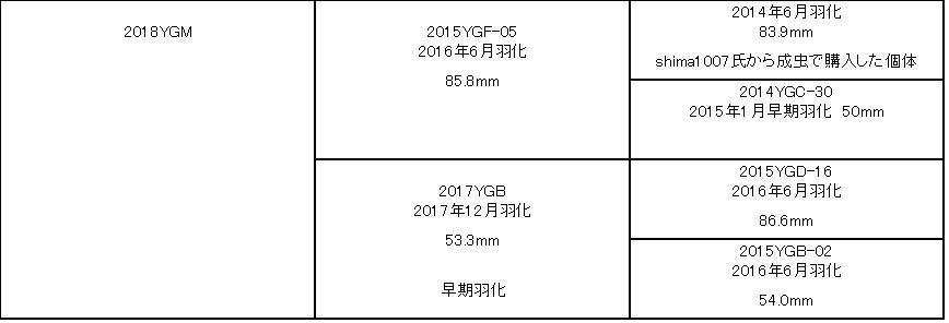 オオクワガタ 85mm 新成虫 訳アリ YG血統_画像6