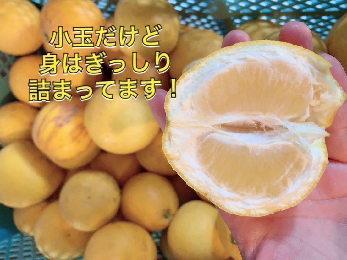 熊本産☆☆減農薬 河内晩柑 25小玉 ☆ 訳あり10kg