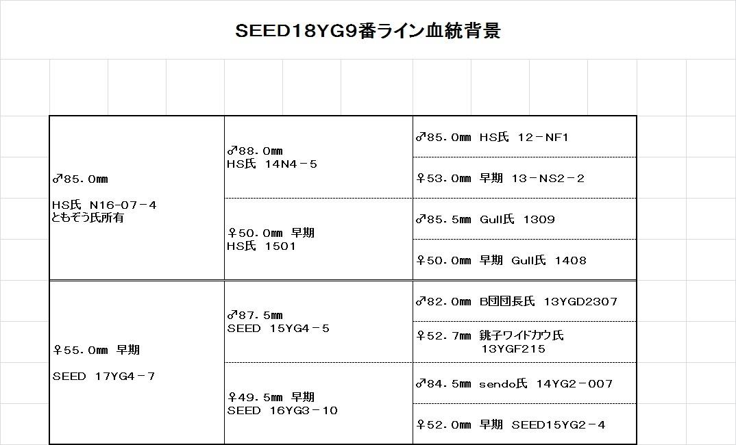 【絶煩SEED】能勢YG新成虫 ♂83.5㎜ ♀55.0㎜ ペア_画像10