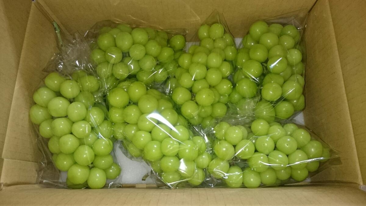 26、【即決】予約【シャインマスカット】たっぷり4キロ箱を果樹園直送でお届けします(^-^)