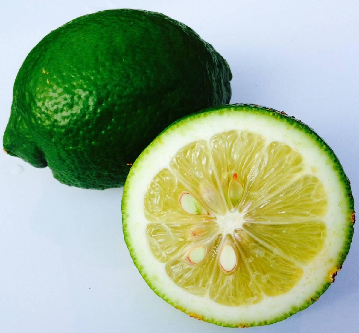 グリーンレモン 正品 1kg 蒲郡産