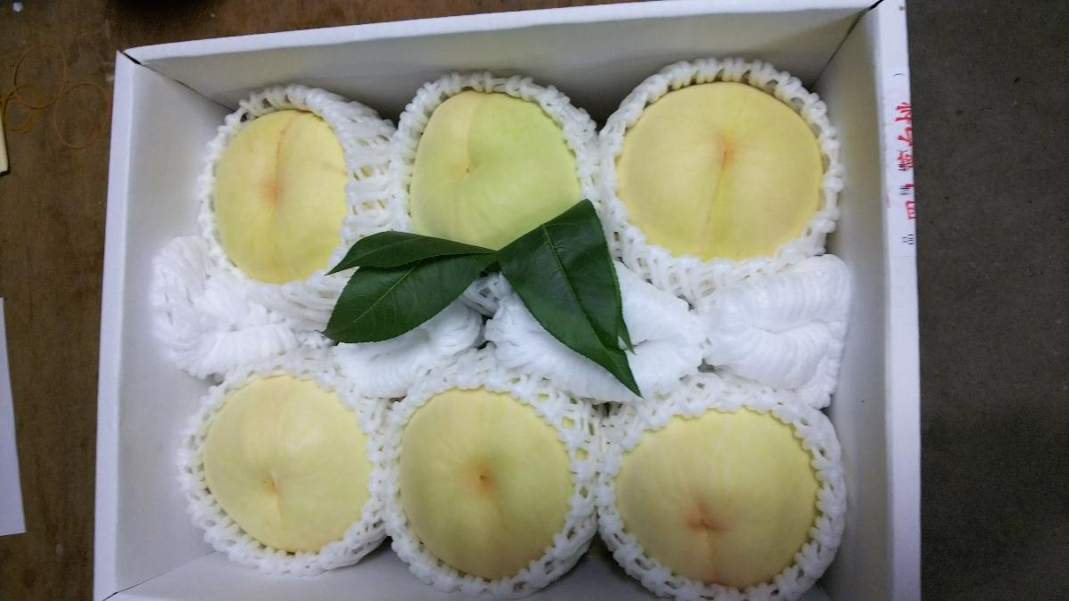 岡山の桃 ご家庭用 「白桃」  約2㎏ 6~9玉  12