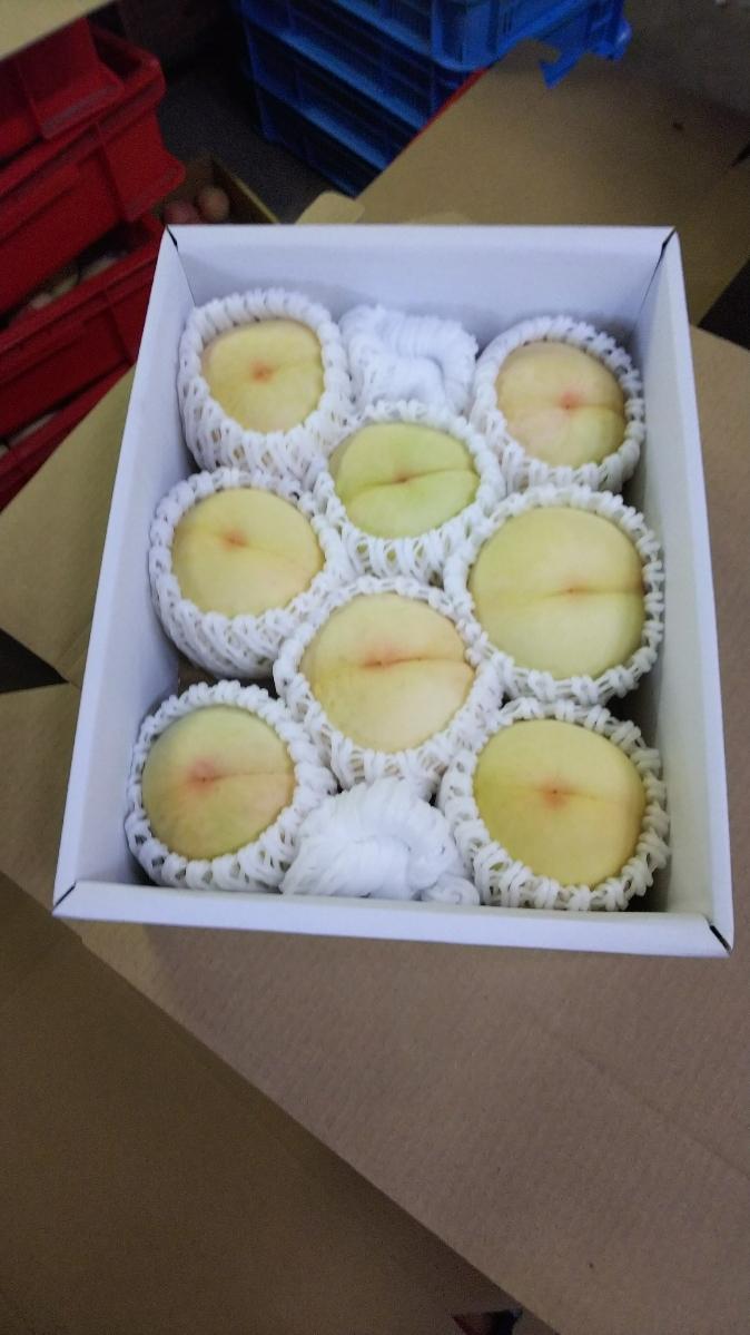 岡山の桃 ご家庭用 「白桃」  約2㎏ 6~9玉  12_画像4