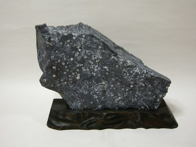 門司梅花石  幅約61.0cm 重さ約35kg 台座付 蕾花無数  福岡県天然記念物 本物保障