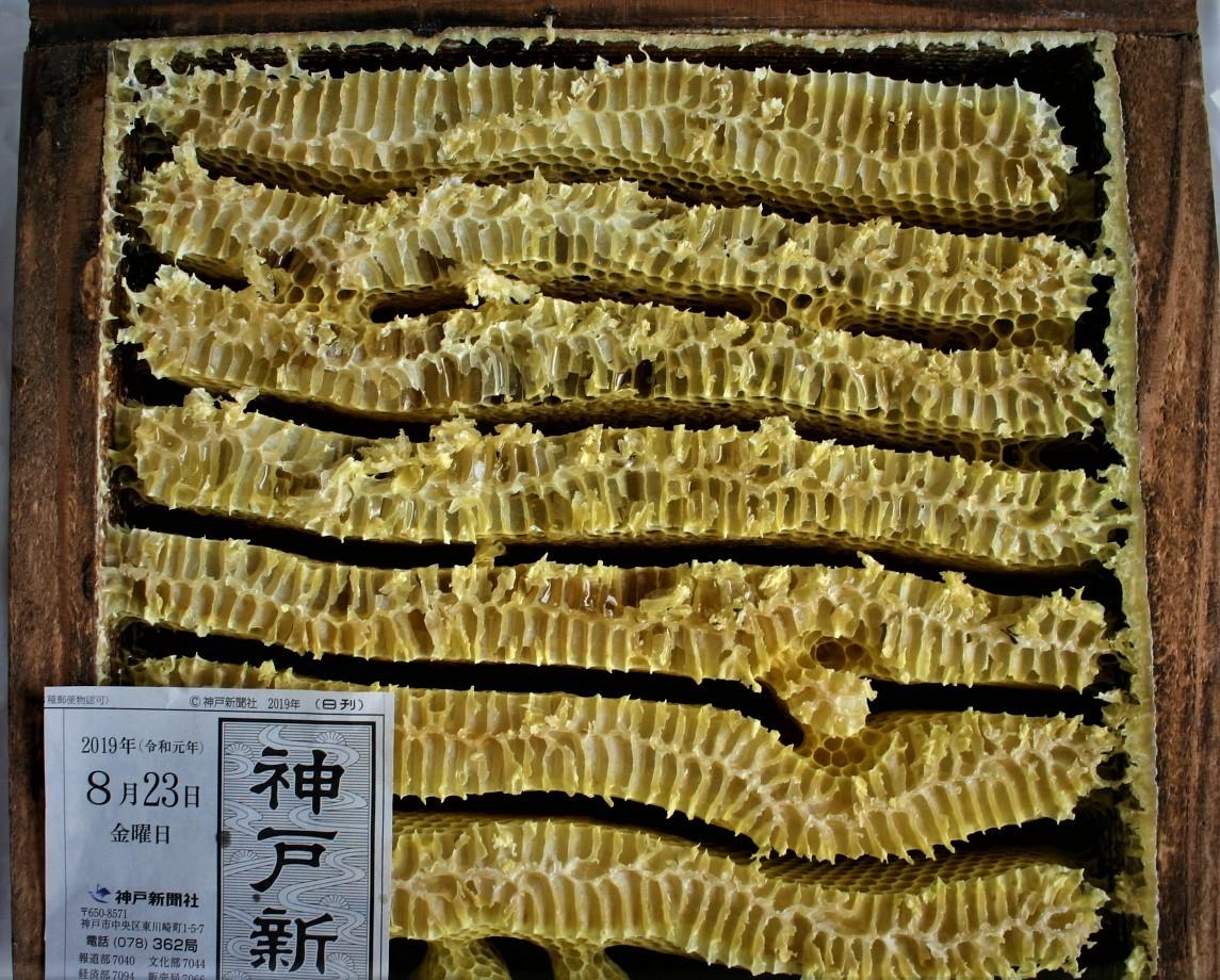 ◎日本蜜蜂 ハチミツ 採りたて爽やかはちみつ 600gお徳用 2本セット 送料無料_画像2
