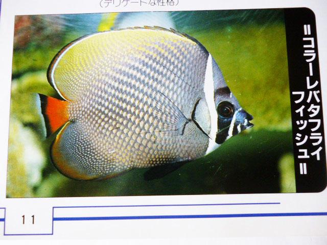海水魚を飼う人のため!参考書 (池田書店)_画像4