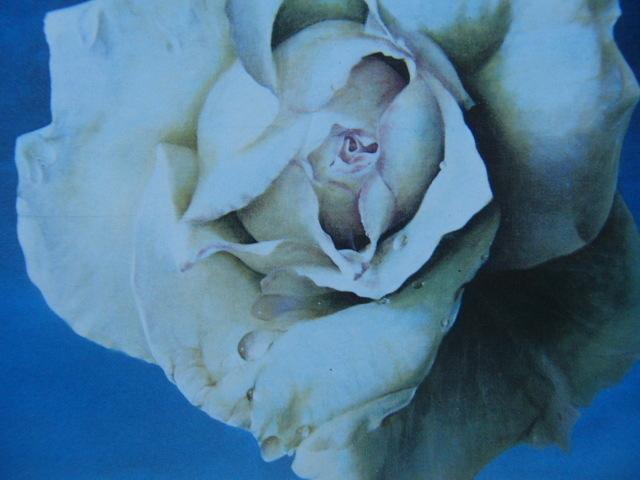 塩崎敬子【白いバラ、薔薇】希少画集画、状態良好、新品高級額装付、送料無料、洋画 油彩 風景、zero_画像3