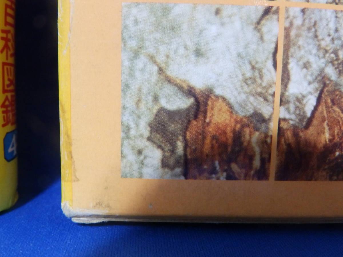 Z 中古 鳥類の図鑑 小学館の学習百科図鑑 4 wide Color 全国学校図書館協議会選定図書 送料込み_画像7
