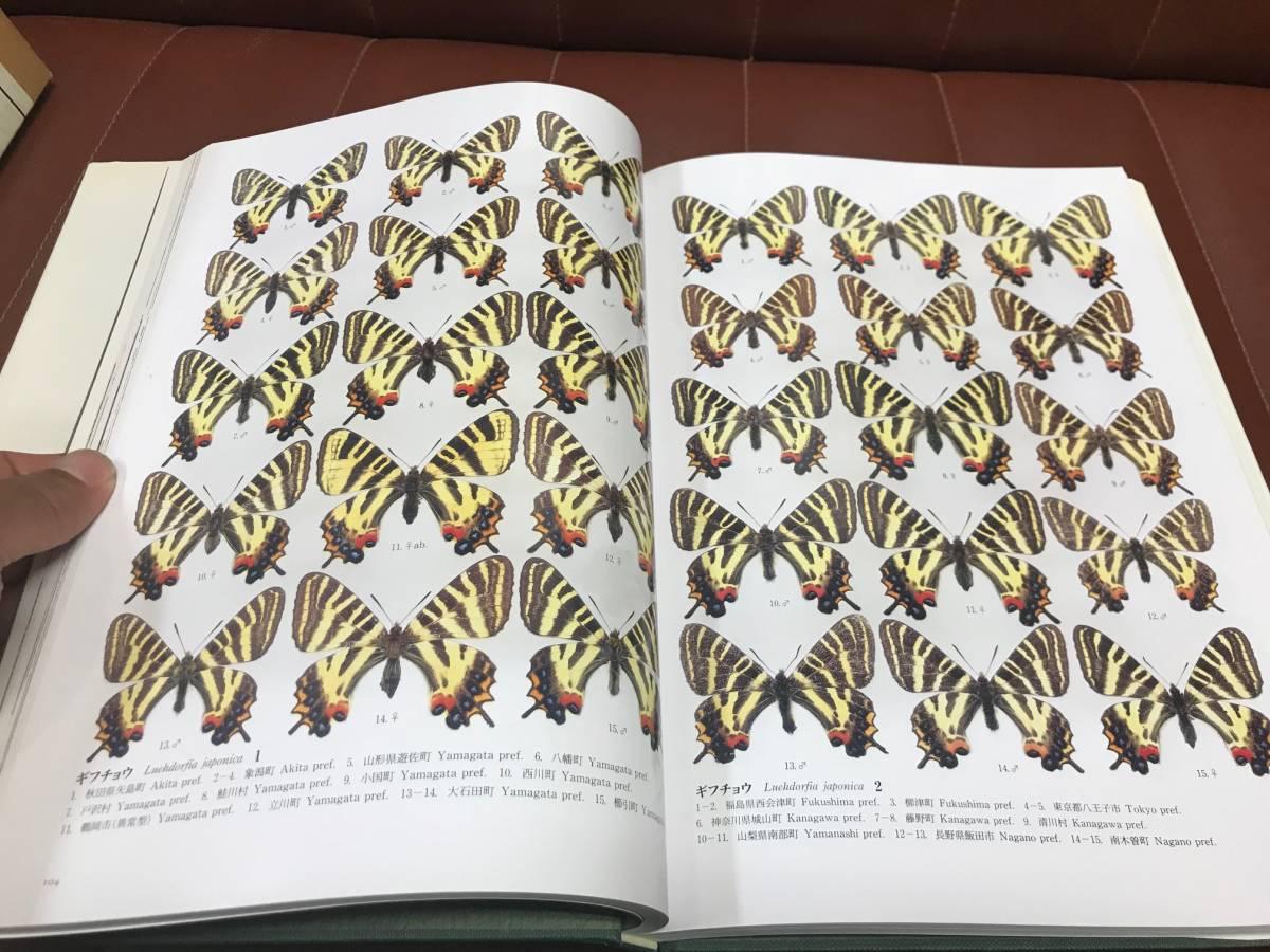 『ギフチョウMonograph of Luehdorfia Butterflies』, 渡辺康之編, (渡辺康之・菅原敬・藤井恒・工藤忠著), 北海道大学国書刊行会_画像2