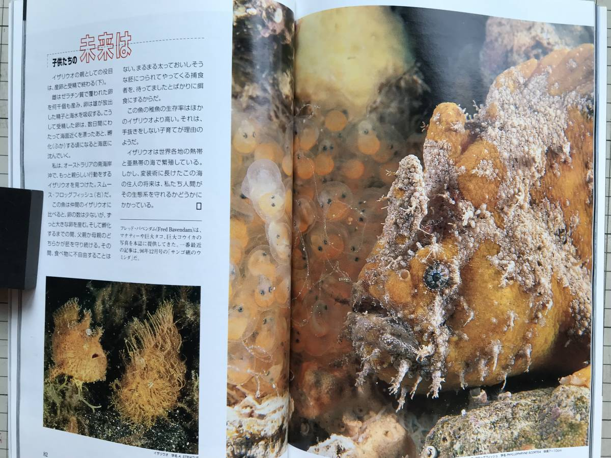 『NATIONAL GEOGRAPHIC 日本版 1998年7~12月号6冊セット』自然災害の恐怖・火星・王家の谷・世界の人口・ハワイの怪物波・寄生虫 他 04872_画像3