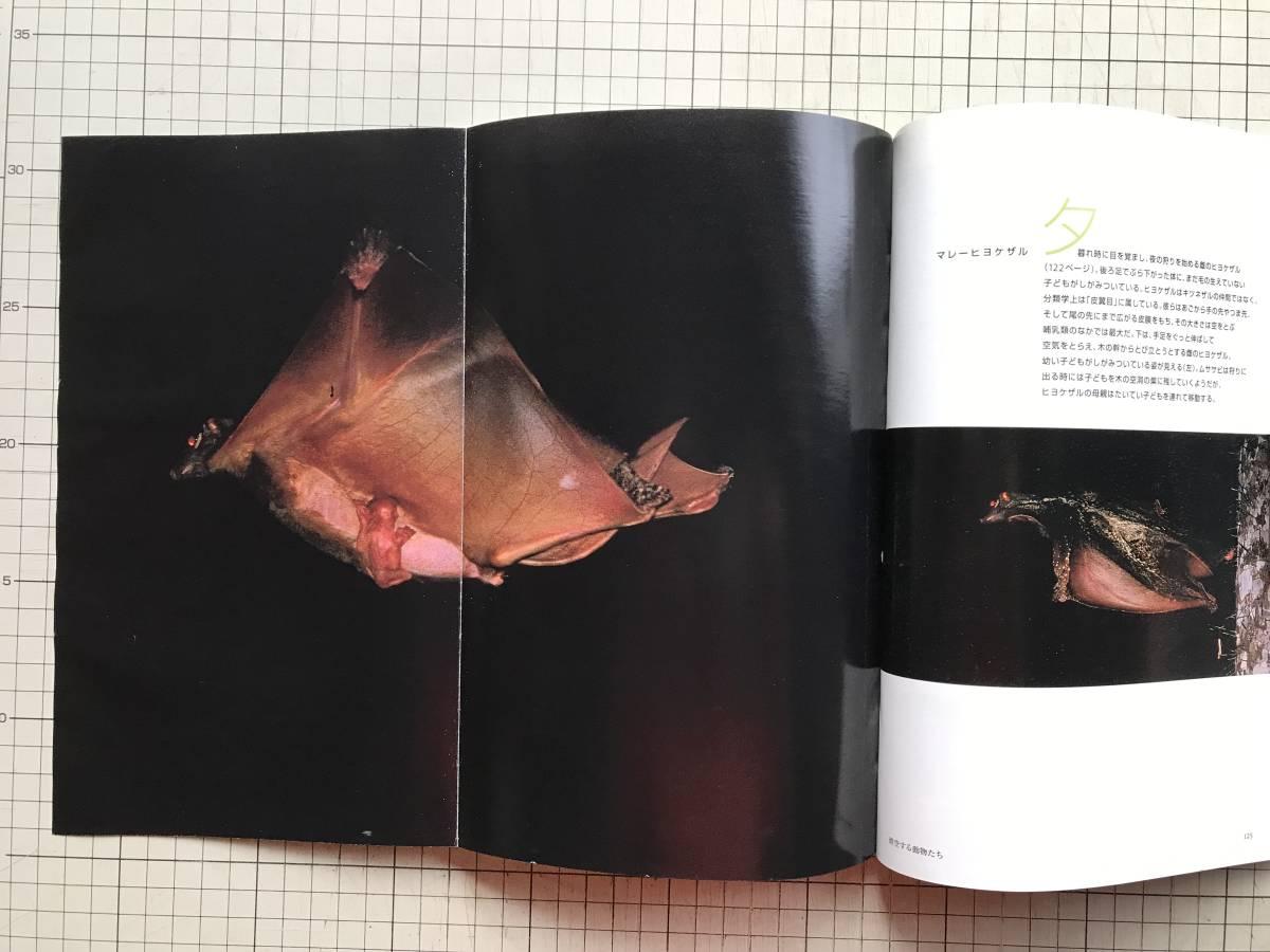 『NATIONAL GEOGRAPHIC 日本版 2000年7~12月号6冊セット』米領サモア・シドニー・ラナ・タルー・ボルネオ・リビア・青ナイル 他 04876_画像7