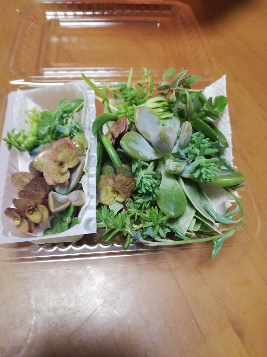 ☆送料無料 多肉植物寄せ植えにどうぞ☆カット苗10種類25カットG☆