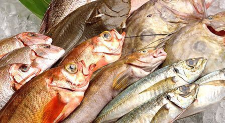 8【水深日本一】 駿河湾の恵み お任せ鮮魚セット5,000円分 魚種は7種類以上!お歳暮 お年賀 高級 ギフト 贈り物 景品 内祝 手土産 賞品_画像1