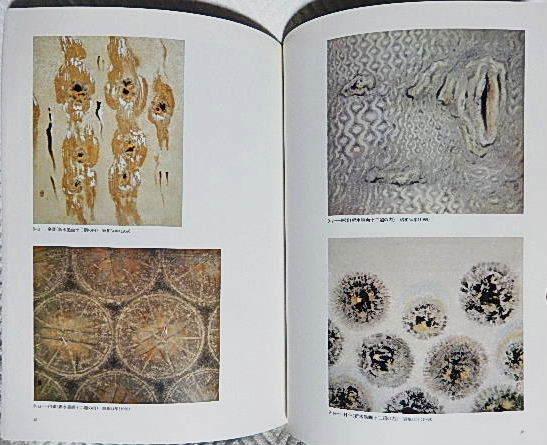 ☆図録 児玉希望 日本画と写生の世界 泉屋博古館 分館 2007☆_画像4