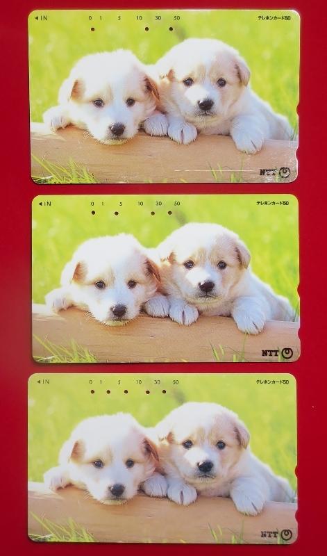 テレホンカード50、使用済み・かわいい子犬2匹 NTT発行、おもて面同一、裏面異なり品(発行時期違い)発行年、犬種不明 わんこ 送料63円_かわいい子犬2匹 NTT発行、おもて面同一