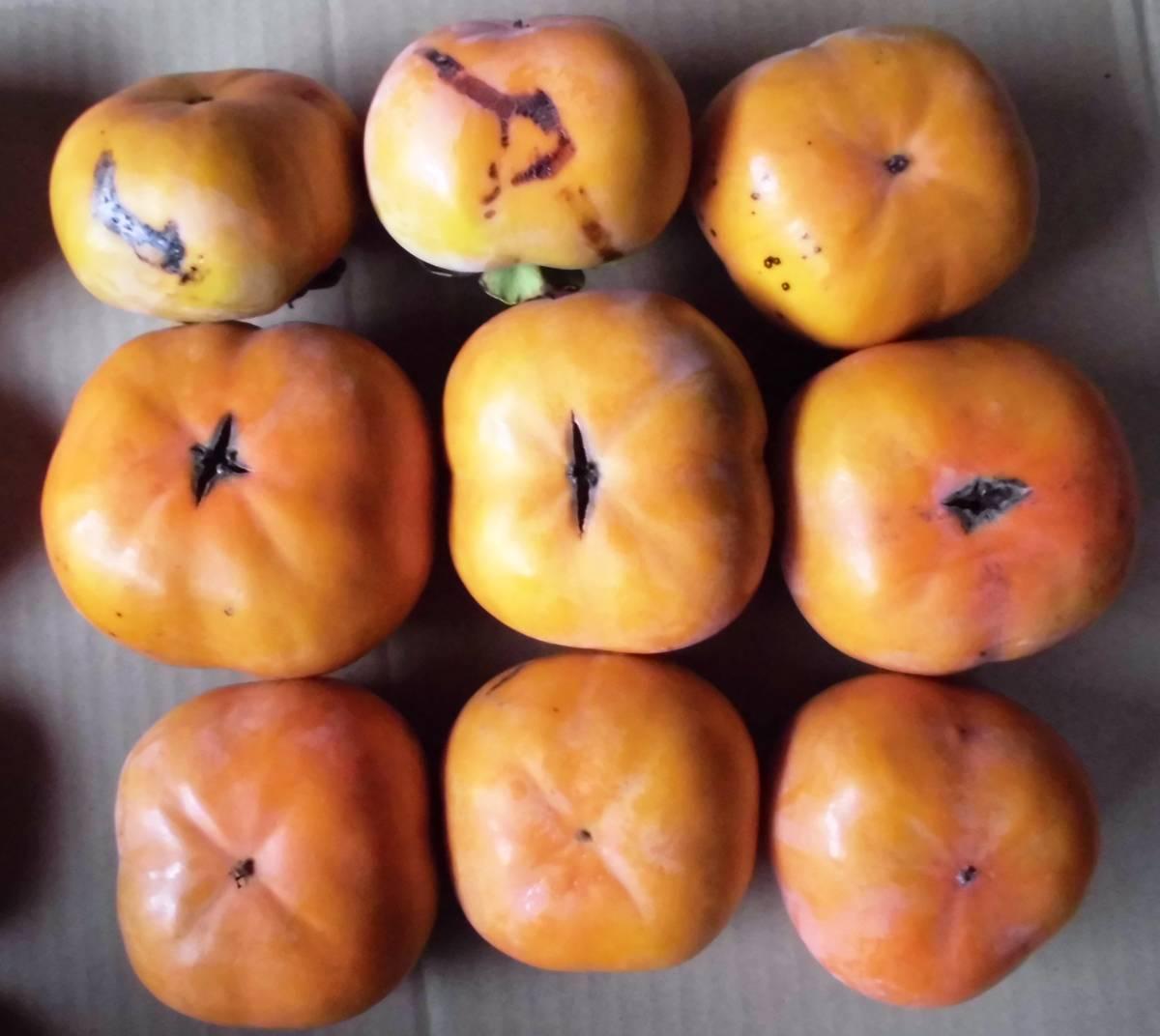 愛知県豊橋産今が旬の次郎柿10kg(家庭用)・・・ シャキシャキ食感が好き_画像3