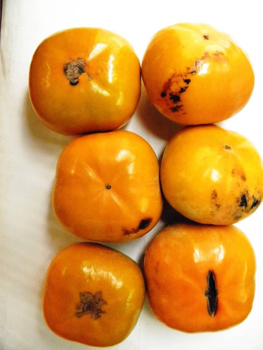 愛知県豊橋産今が旬の次郎柿10kg(家庭用)・・・ シャキシャキ食感が好き