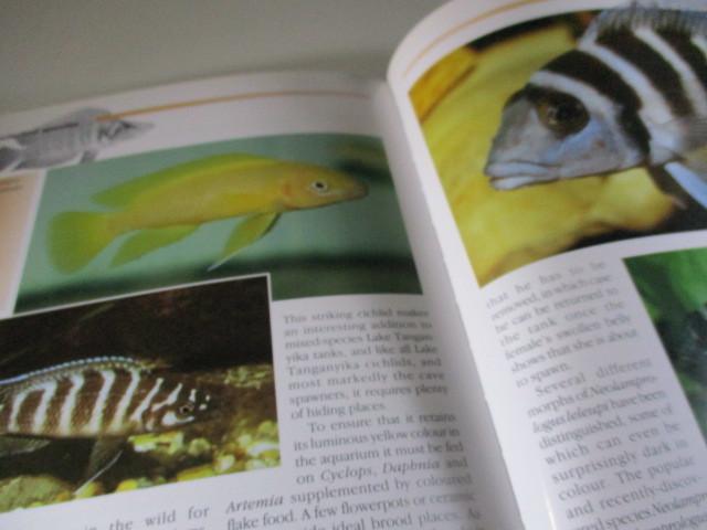 タンガニーカ湖のシクリッド図鑑 アフリカン・シクリッド 魚_画像3