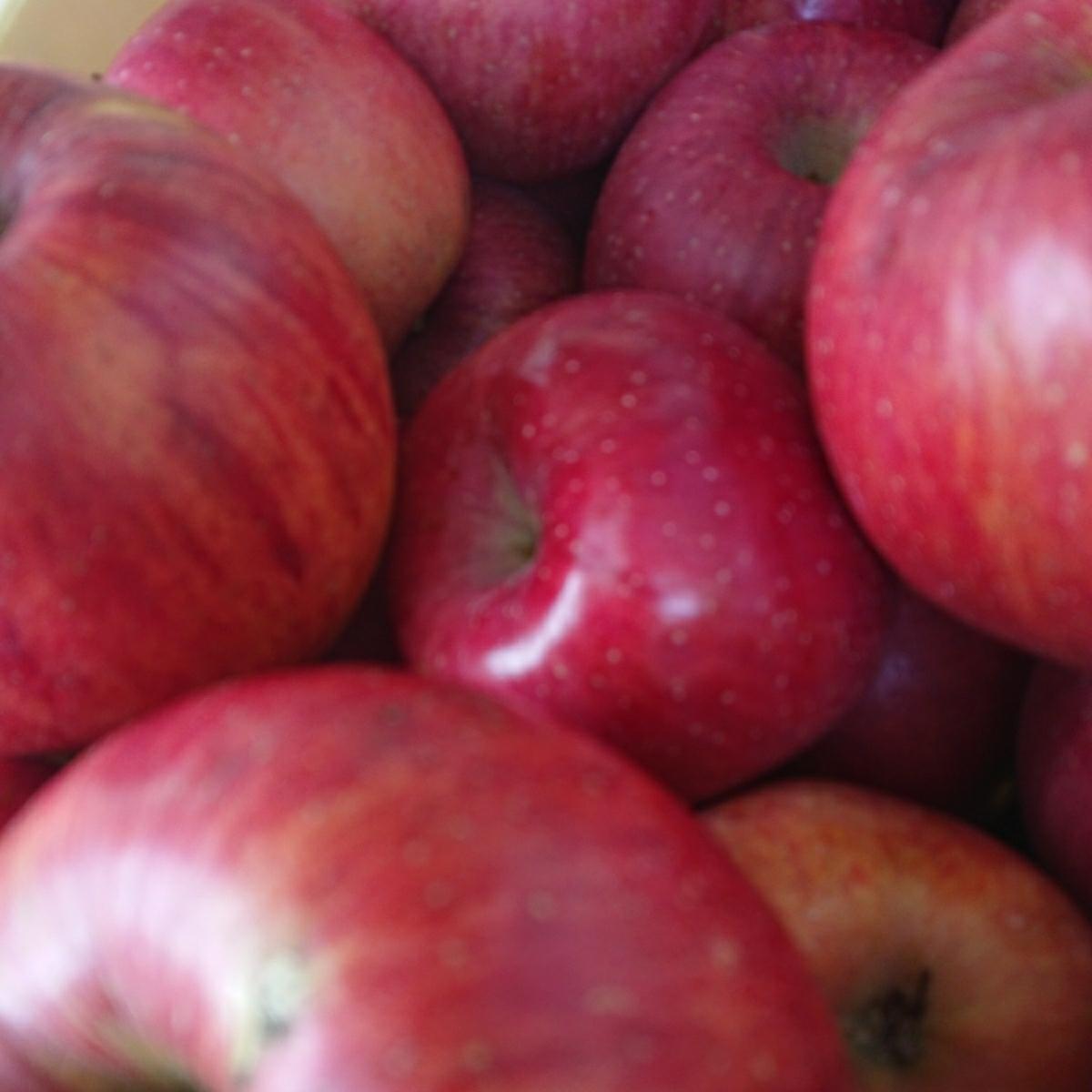 みずみずしく美味しい!【減農薬】サンふじ 【無肥料】たっぷり15キロ 信州りんご_画像2