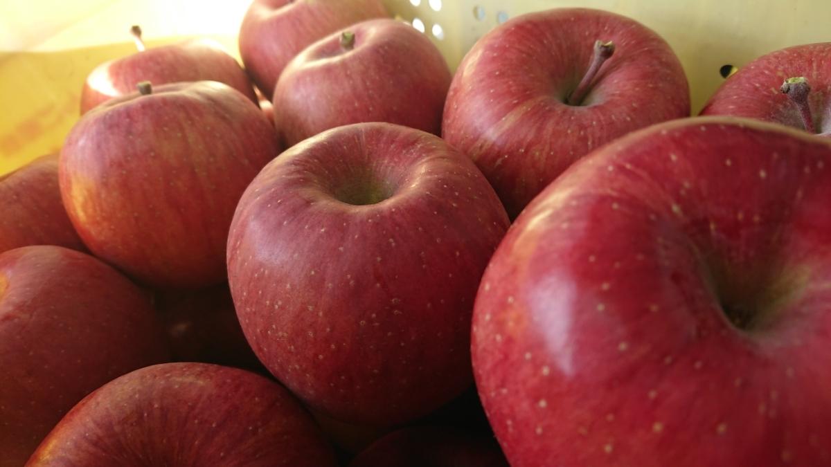 みずみずしく美味しい!【減農薬】サンふじ 【無肥料】たっぷり15キロ 信州りんご