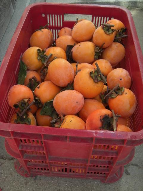 岡山の柿「あたご柿」 8kg 特大サイズ 約35~40個 36_画像3