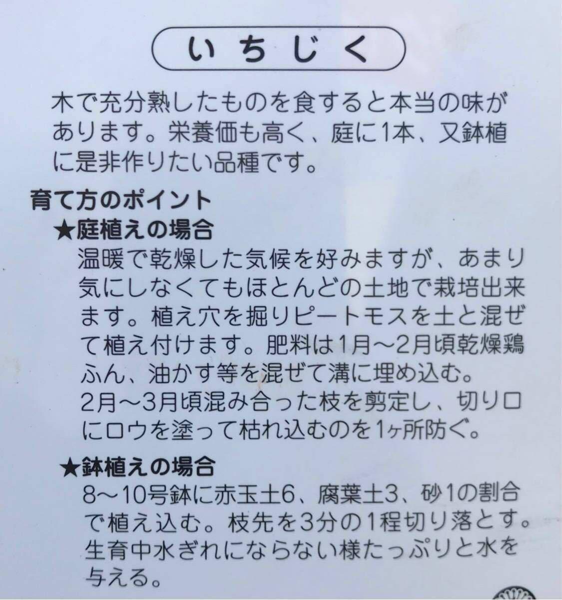 ホワイト種 いちぢく苗木_画像2