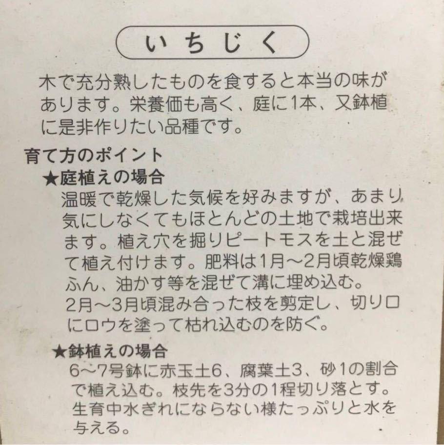 イチヂク(ドーフィン)無花果苗木_画像2