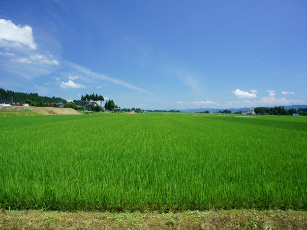 米 お米 5kg はえぬき 山形県産 令和元年産 玄米 白米 選べる 送料無料 精米無料 一等米_画像3