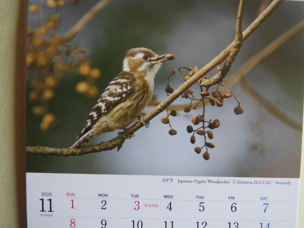 新品半額「野鳥カレンダー2020 BIRDS IN SEASONS」日本野鳥の会 ボストカードとしても使えます_画像2
