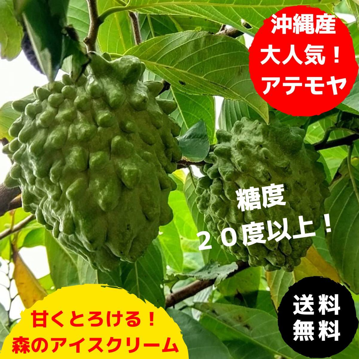 ギフトや贈答用に!甘くとろける!森のアイスクリーム沖縄産アテモヤ 秀品 1.5kg