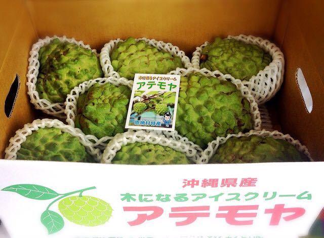 ギフトや贈答用に!甘くとろける!森のアイスクリーム沖縄産アテモヤ 秀品 1.5kg_画像3