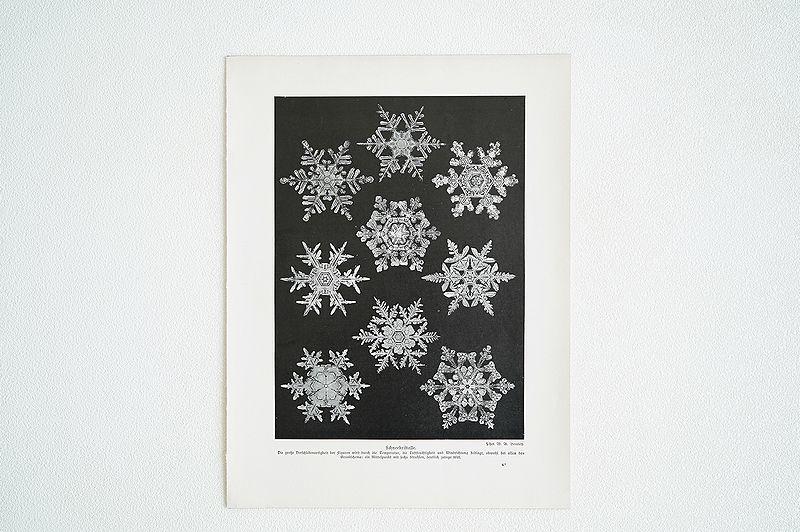 【アンティーク博物図版 雪の結晶 紙もの】ビンテージ ブロカント 紙物 研究 実験 レトロ 古道具 資料 蚤の市 ディスプレイ インテリアに
