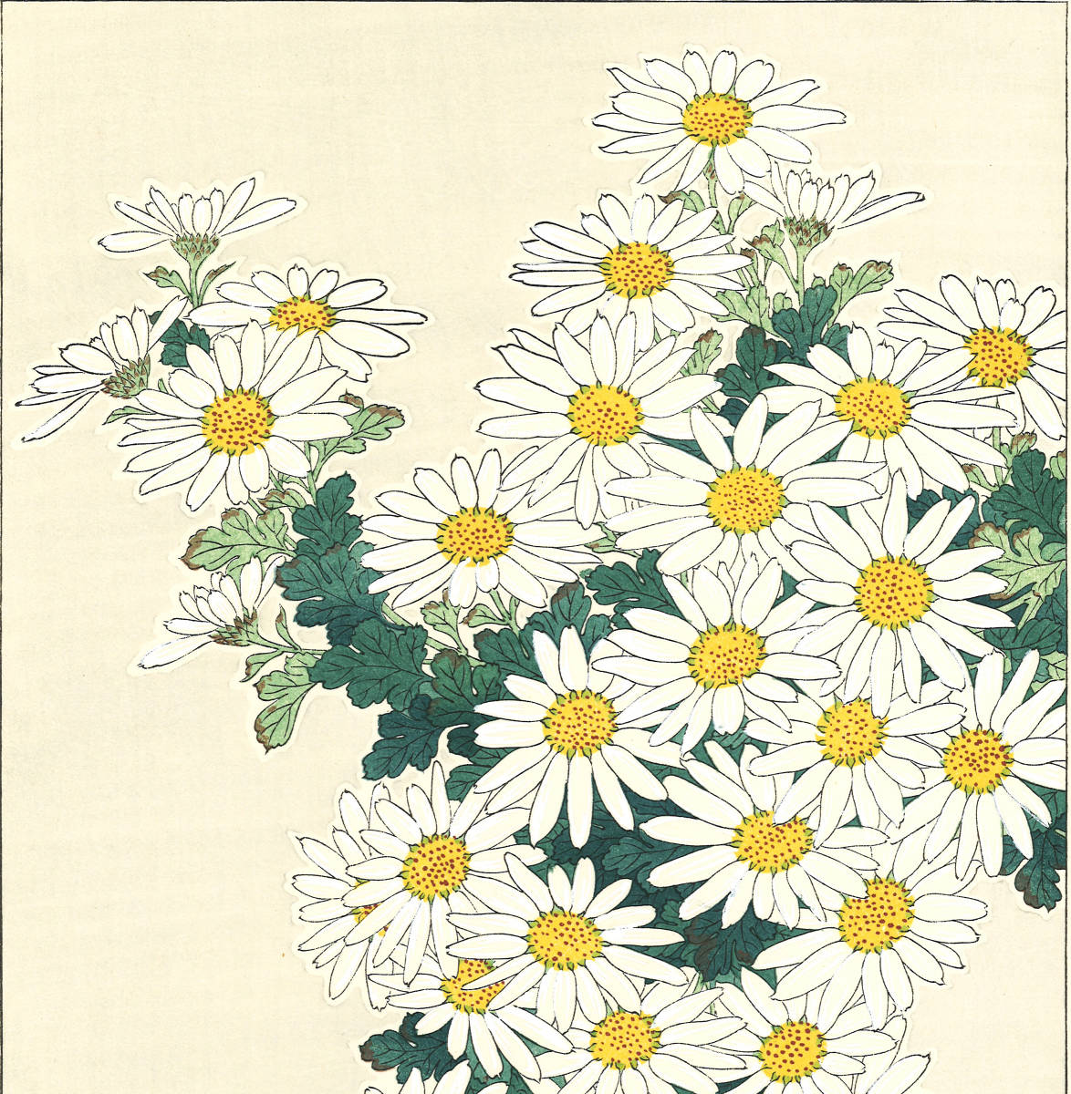 河原崎奨堂 (Kawarazaki Shodo) (1899~1973)木版画 F037 菊 花版画(Chrysanthemum)初版昭和初期~京都の一流の摺師の技をご堪能下さい。_画像6