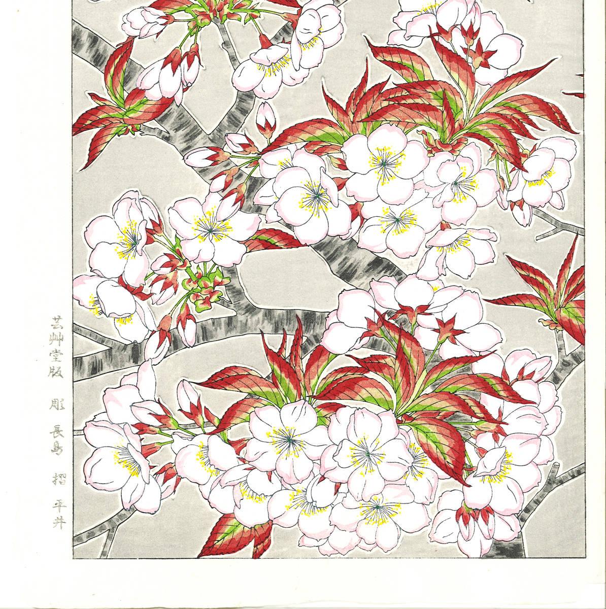 河原崎奨堂 (Kawarazaki Shodo) (1899~1973) 木版画 F020 桜 花版画 (cherry) 初版昭和初期~ 京都の一流の摺師の技をご堪能下さい。_画像5