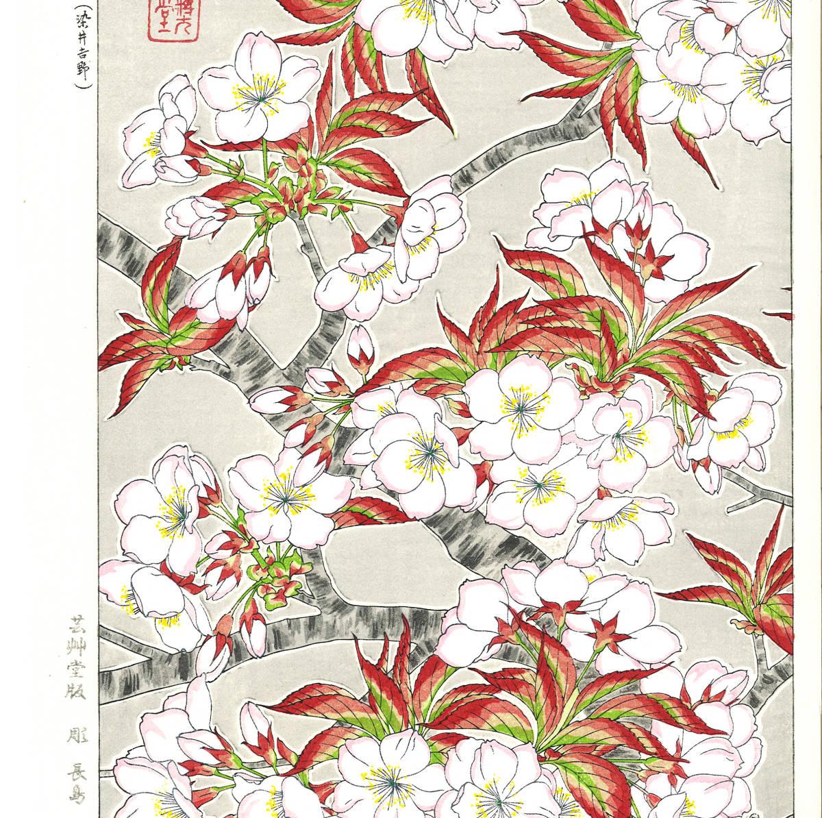 河原崎奨堂 (Kawarazaki Shodo) (1899~1973) 木版画 F020 桜 花版画 (cherry) 初版昭和初期~ 京都の一流の摺師の技をご堪能下さい。_画像4