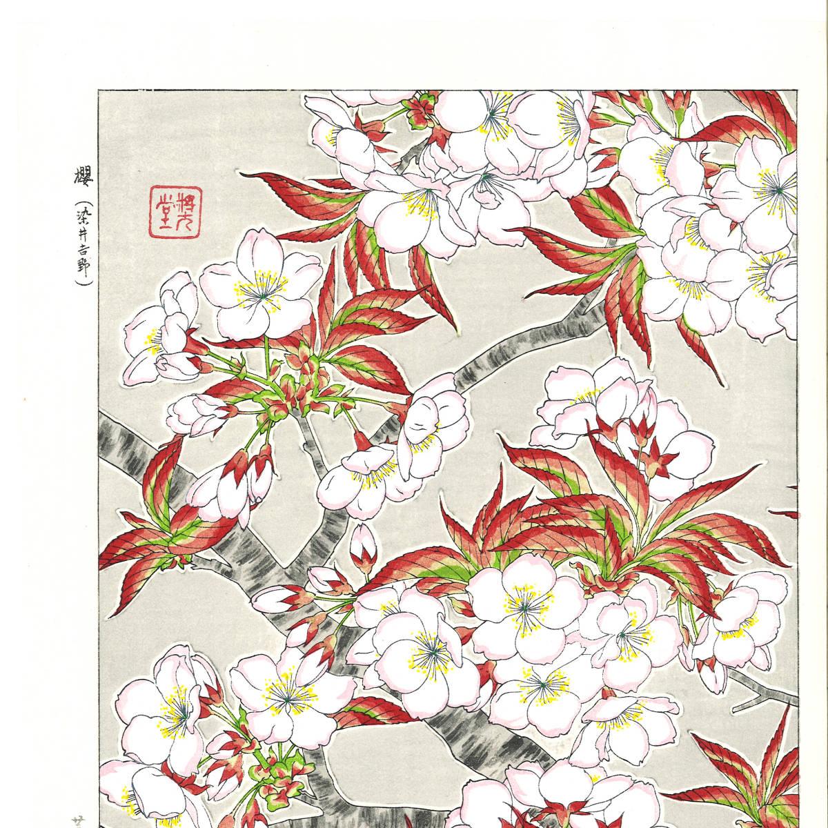 河原崎奨堂 (Kawarazaki Shodo) (1899~1973) 木版画 F020 桜 花版画 (cherry) 初版昭和初期~ 京都の一流の摺師の技をご堪能下さい。_画像3