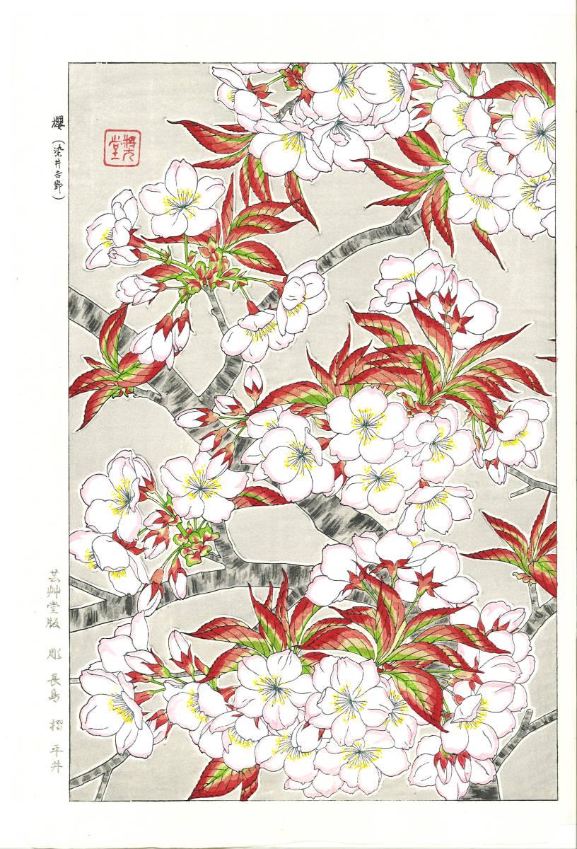 河原崎奨堂 (Kawarazaki Shodo) (1899~1973) 木版画 F020 桜 花版画 (cherry) 初版昭和初期~ 京都の一流の摺師の技をご堪能下さい。_画像1