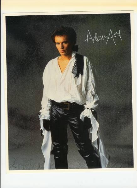 adam antピンナップ  非売品  新品