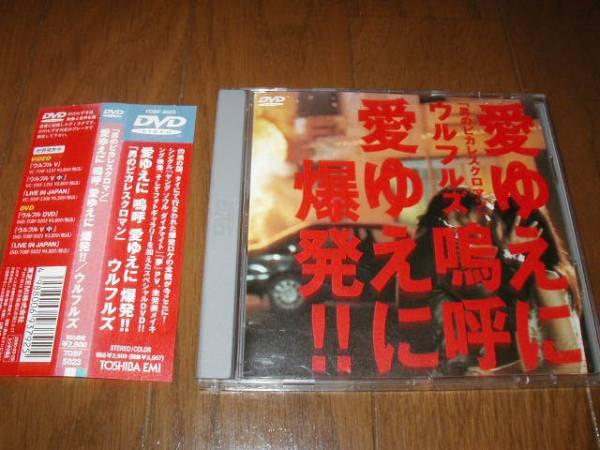 DVDウルフルズ男のピカレスクロマン愛ゆえに嗚呼愛ゆえに爆発!! ライブグッズの画像