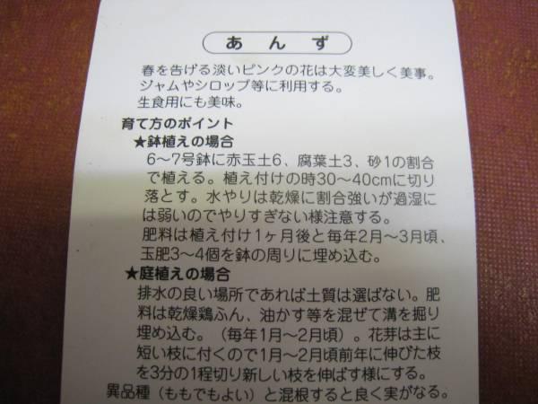杏★あんず(信州大実)苗木_画像2