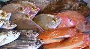 3●鮮魚セット●駿河湾獲れたて直送 旬魚をご家庭に!福袋